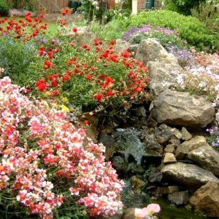 Les fleurs de rocaille : aménagement et choix des variétés